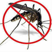 Foods That Bug Mosquitos